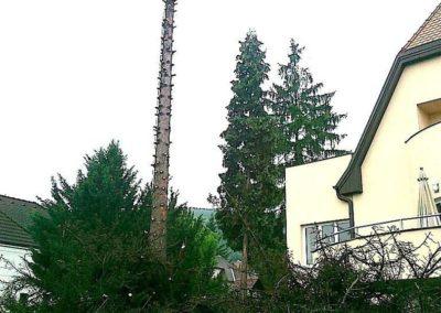 Výškové kácení stromů 01