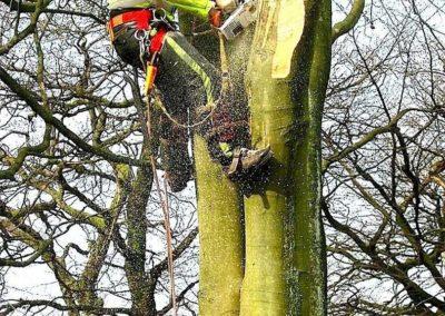 Výškové kácení stromů 02